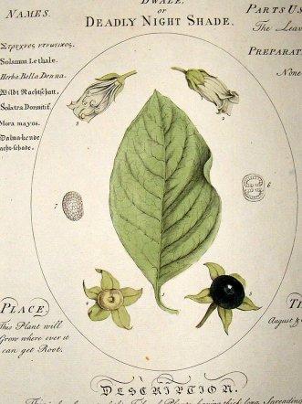sheldrake-1759-medical-botany.-dwale-or-deadly-nightshade.-hand-col-[2]-14861-p