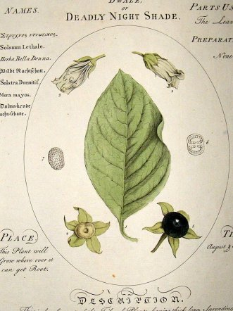 sheldrake-1759-medical-botany.-dwale-or-deadly-nightshade.-hand-col-[2]-14861-p